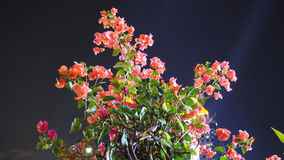 Flor rosada en noche Imagen de archivo libre de regalías