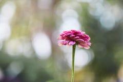Flor rosada foco en el pétalo fotos de archivo