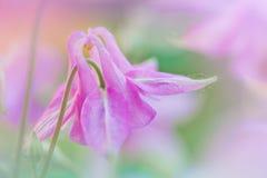 Flor rosada, foto macra Foto de archivo