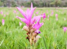 Flor rosada fresca Foto de archivo