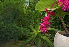 Flor rosada grande brillante colgante de la flor jugosa y colorida Foto de archivo