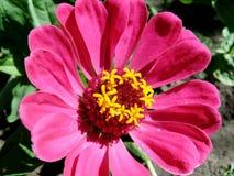 Flor rosada hermosa fotos de archivo libres de regalías