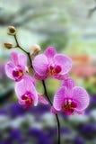 Flor rosada hermosa Imagen de archivo libre de regalías