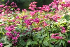 Flor rosada hermosa Imagen de archivo