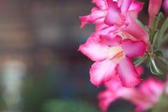 Flor rosada hermosa Foto de archivo
