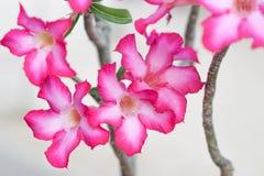 Flor rosada hermosa Fotografía de archivo libre de regalías