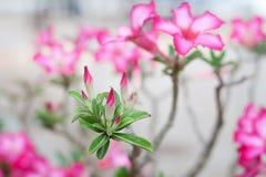 Flor rosada hermosa Fotografía de archivo