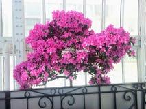 Flor rosada hermosa Bush Imágenes de archivo libres de regalías