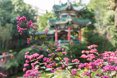 Flor rosada hermosa con el fondo chino del templo Fotos de archivo libres de regalías