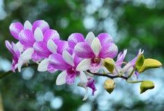 Flor rosada hermosa de la orquídea en el fondo borroso, selectivo Imagenes de archivo