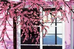 Flor rosada hermosa de Sakura de la flor de cerezo, y con el fondo del edificio de Japón del vintage foto de archivo libre de regalías