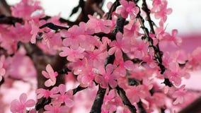 Flor rosada hermosa de Sakura de la flor de cerezo, y con el fondo del edificio de Japón del vintage imagenes de archivo