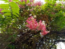 Flor rosada hermosa en estación de primavera imagenes de archivo