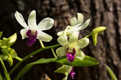 Flor rosada oscura de las orquídeas de la mezcla amarilla Imagen de archivo libre de regalías