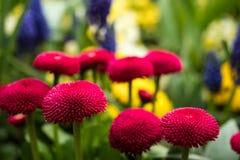 Flor rosada preciosa en jardín Fotos de archivo libres de regalías