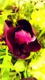 Flor rosada preciosa en una planta foto de archivo libre de regalías