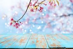 Flor rosada Sakura de la flor de cerezo en fondo del cielo en estación de primavera Fotografía de archivo libre de regalías