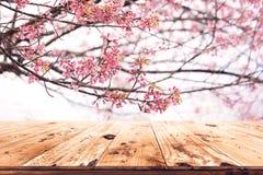 Flor rosada Sakura de la flor de cerezo en fondo del cielo en estación de primavera Imágenes de archivo libres de regalías