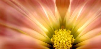 Flor rosada suave Foto de archivo libre de regalías