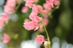 Flor rosada suave borrosa Fotos de archivo libres de regalías