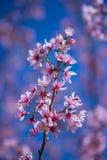 Flor rosada y cielo azul Fotografía de archivo