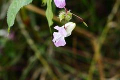 Flor rosada y fondo borroso fotografía de archivo libre de regalías