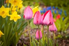Flor rosada y hoja verde en el cielo azul Imagen de archivo