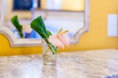 Flor rosada y hoja verde en pequeño vidrio transparente imagenes de archivo
