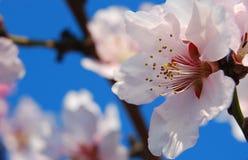 Flor rosado imagen de archivo