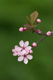 Flor rosado fotos de archivo