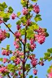 Flor rosado Fotografía de archivo libre de regalías