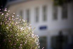 Flor rosado Fotografía de archivo