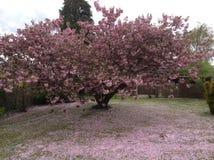 Flor rosado Imagen de archivo libre de regalías
