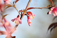 Flor rosado de la flor Imagen de archivo libre de regalías