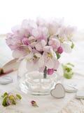 Flor rosado de la manzana Imagen de archivo libre de regalías