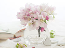 Flor rosado de la manzana Fotos de archivo libres de regalías