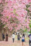 Flor rosado dulce de la flor en estación de primavera Foto de archivo libre de regalías