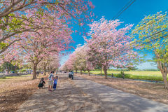 Flor rosado dulce de la flor en estación de primavera Fotografía de archivo libre de regalías
