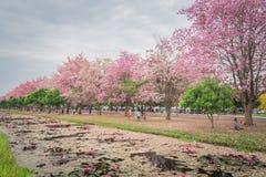 Flor rosado dulce de la flor en estación de primavera Fotos de archivo