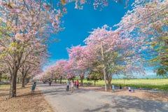 Flor rosado dulce de la flor en estación de primavera Fotos de archivo libres de regalías