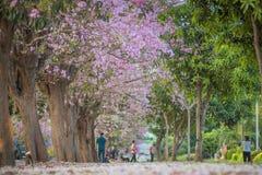 Flor rosado dulce de la flor en estación de primavera Imagen de archivo