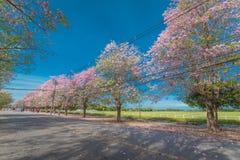 Flor rosado dulce de la flor en estación de primavera Foto de archivo