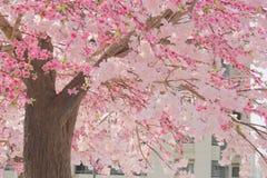 Flor rosado en la ciudad Foto de archivo