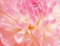 Flor rosado fina Imagem de Stock Royalty Free