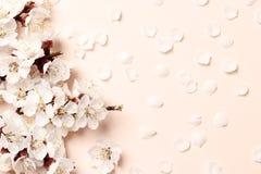 Flor rosado hermoso del melocotón imagen de archivo
