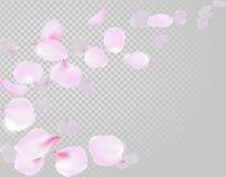 Flor rosado suavemente delicado color de rosa de los pétalos que cae en fondo transparente Flores del vuelo de la cereza de Sakur Foto de archivo