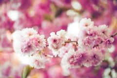 Flor rosado vibrante Fotos de archivo