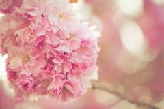 Flor rosado vibrante Imagen de archivo libre de regalías