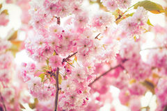 Flor rosado vibrante Imágenes de archivo libres de regalías