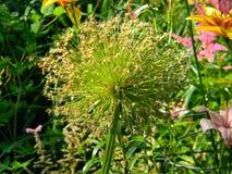 Flor roxa 2 fotos de stock royalty free